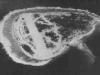 falalopair